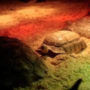 Exposición La fauna reptiliana