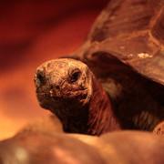 Tortugas octogenarias en la exposición de reptiles de la Feria de Muestras