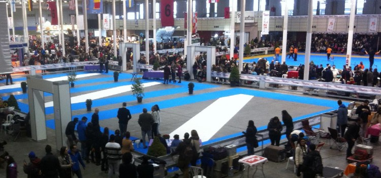 XXXVI y XXXIII Exposición Nacional e Internacional Canina los días 27 y 28 de febrero
