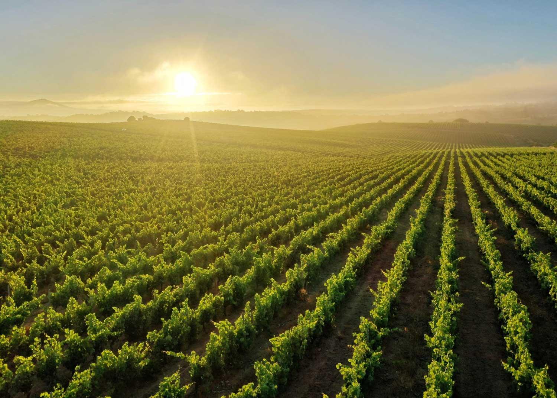 La región portuguesa de Pinhel presenta en FINE su oferta enoturística