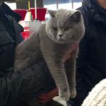 Fimascota acoge la celebración del mayor evento nacional de gatos